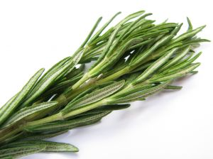Opening-salvos-fresh-rosemary