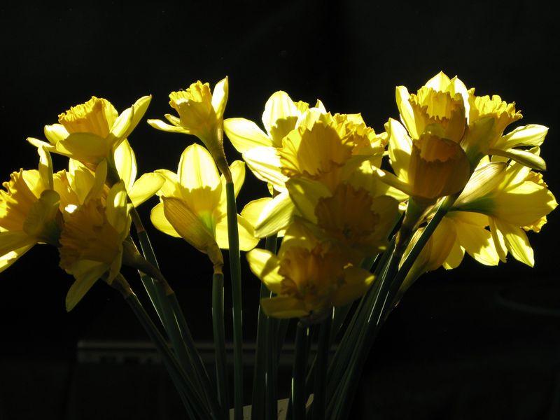 Daffos